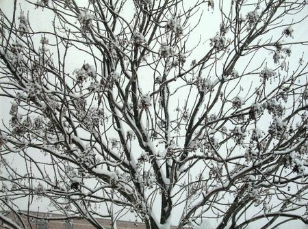 Snowy_friday_5_2